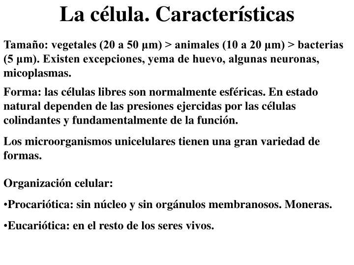 Tamaño: vegetales (20 a 50 μm) > animales (10 a 20 μm) > bacterias (5 μm). Existen excepciones, yema de huevo, algunas neuronas, micoplasmas.