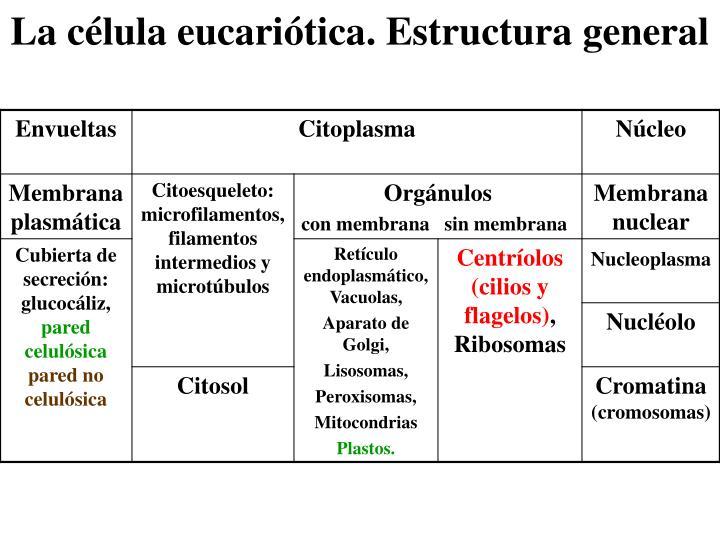 La célula eucariótica. Estructura general