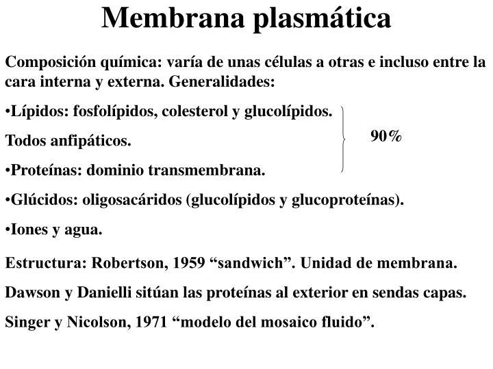 Composición química: varía de unas células a otras e incluso entre la cara interna y externa. Generalidades: