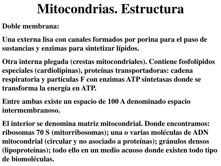 Mitocondrias. Estructura
