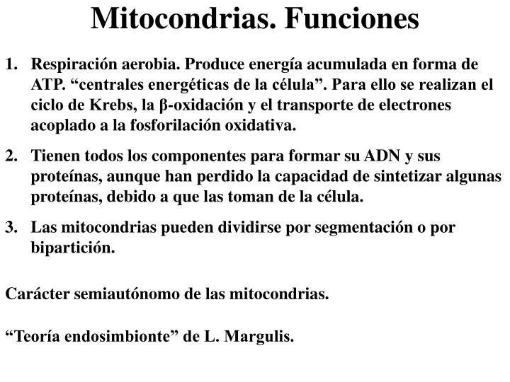 """Respiración aerobia. Produce energía acumulada en forma de ATP. """"centrales energéticas de la célula"""". Para ello se realizan el ciclo de Krebs, la β-oxidación y el transporte de electrones acoplado a la fosforilación oxidativa."""