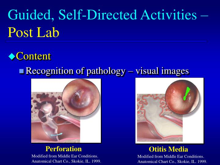 Guided, Self-Directed Activities –