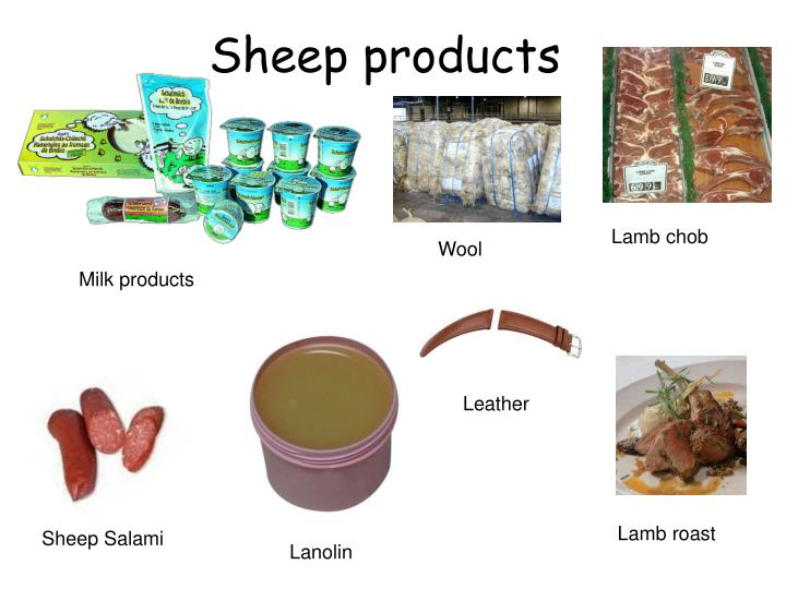 Sheep products