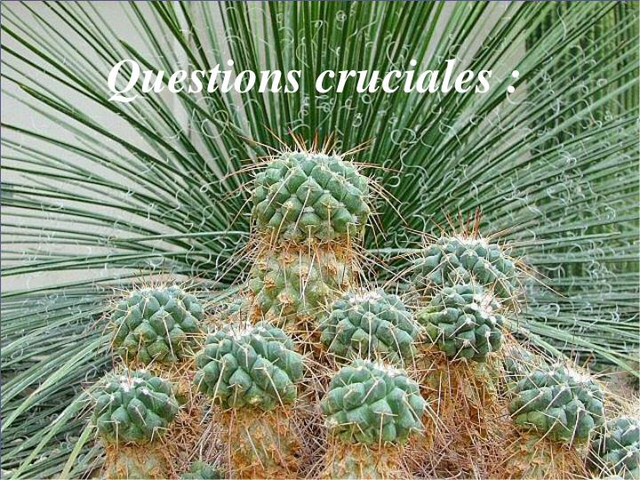 Questions cruciales :