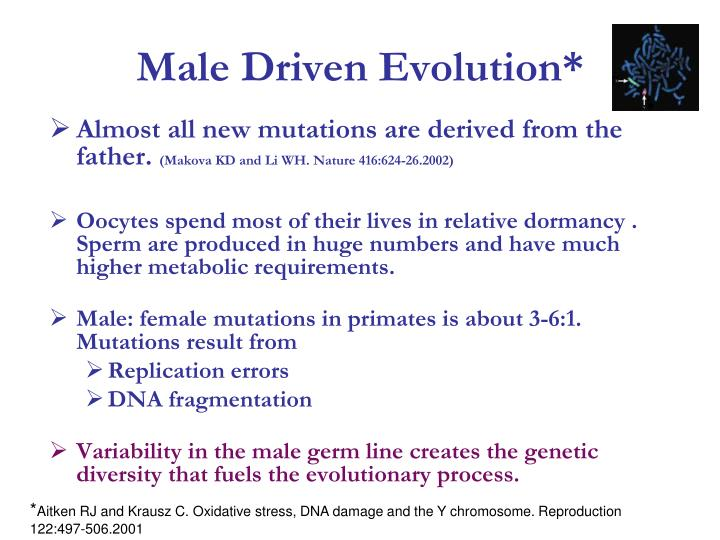 Male Driven Evolution*