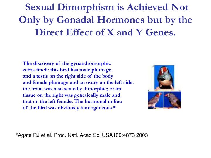Sexual Dimorphism is Achieved Not Only by Gonadal Hormones but by the Direct Effect of X and Y Genes.