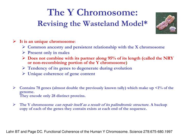 The Y Chromosome: