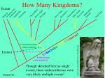 how many kingdoms3