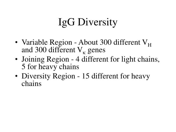 IgG Diversity