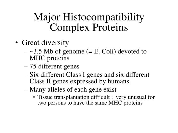 Major Histocompatibility Complex Proteins