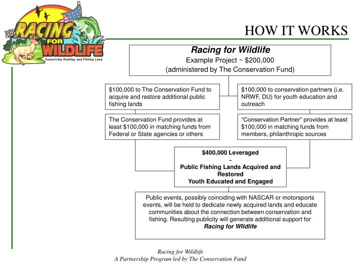 Racing for Wildlife