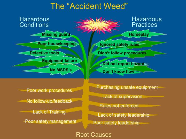 "The ""Accident Weed"""
