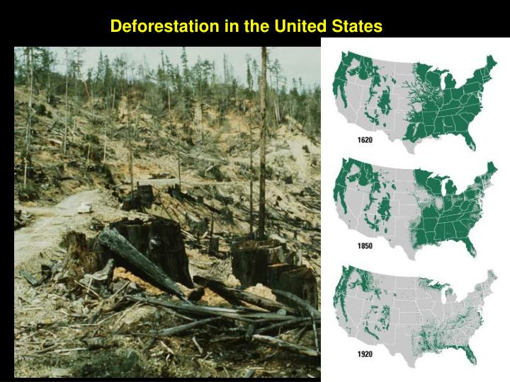 an essay on deforestation in the united states A presentation about the state of the world's forests, the main causes behind  deforestation, and  short & long term effects of deforestation 5.