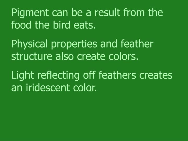Pigment can be a result from the food the bird eats.