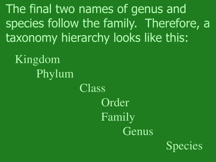 The final two names of genus and species follow the family.  Therefore, a taxonomy hierarchy looks like this: