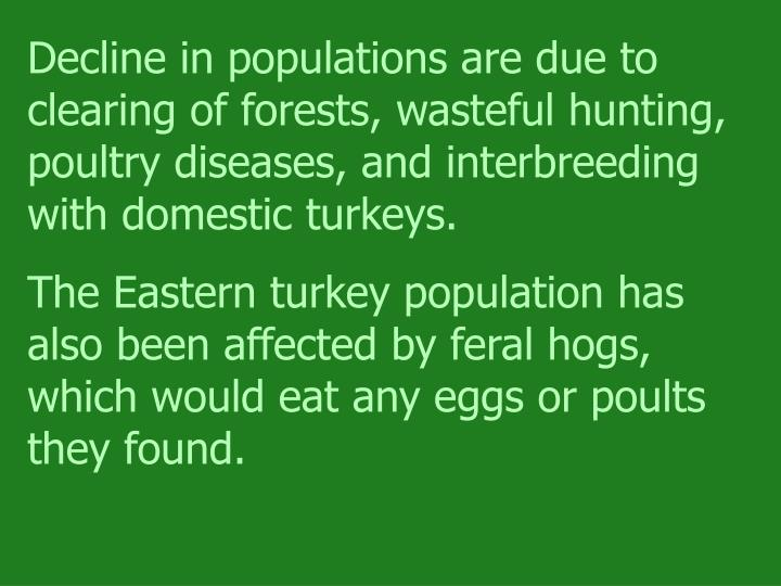 Decline in populations are due to clearing of forests, wasteful hunting, poultry diseases, and interbreeding with domestic turkeys.