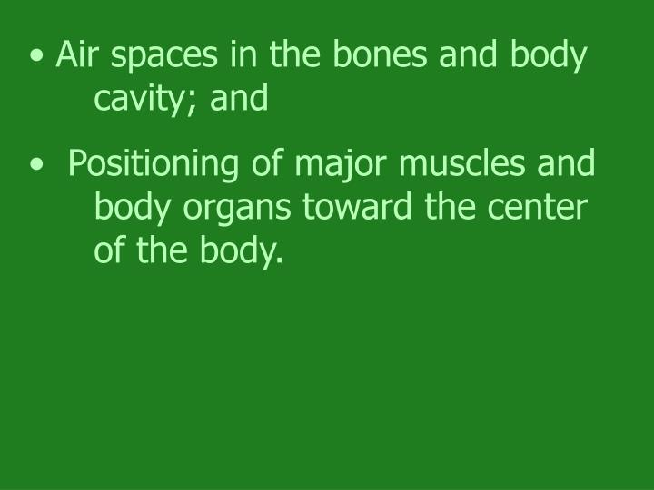 Air spaces in the bones and body cavity; and
