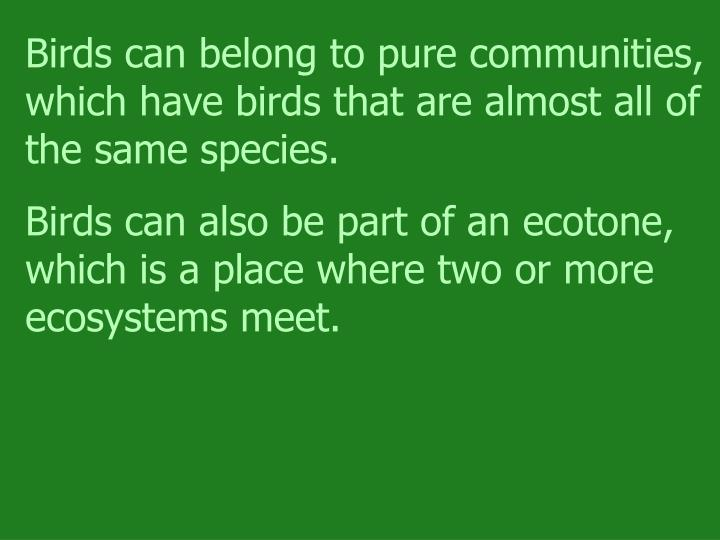 Birds can belong to pure communities, which have birds that are almost all of the same species.