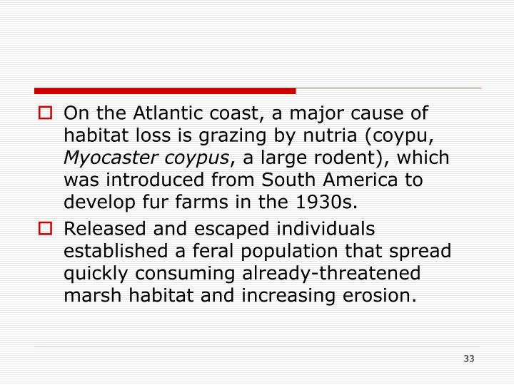 On the Atlantic coast, a major cause of habitat loss is grazing by nutria (coypu,