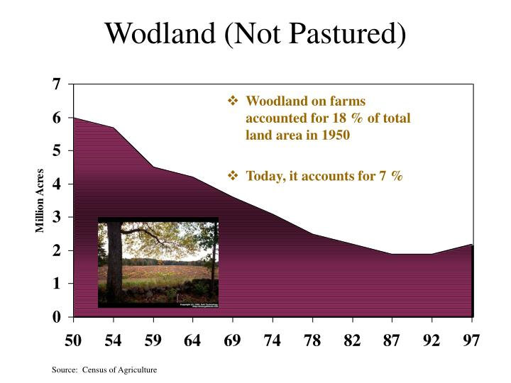 Wodland (Not Pastured)