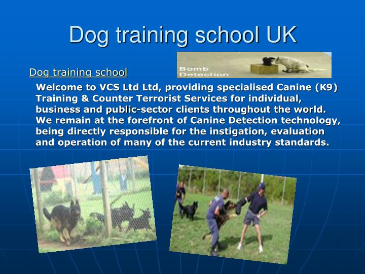 Dog training school uk