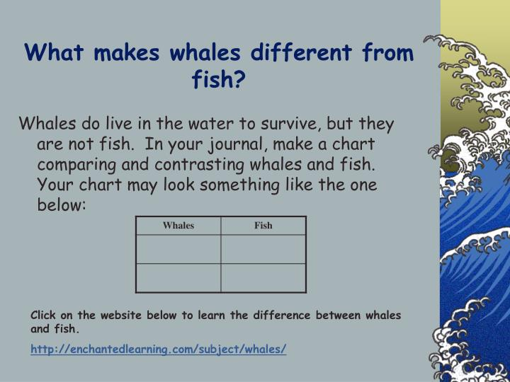 What makes whales different from fish?