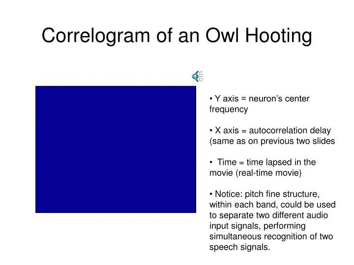Correlogram of an Owl Hooting