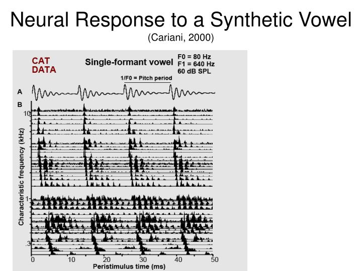 Neural Response to a Synthetic Vowel