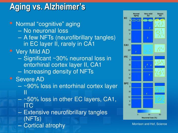 Aging vs. Alzheimer's