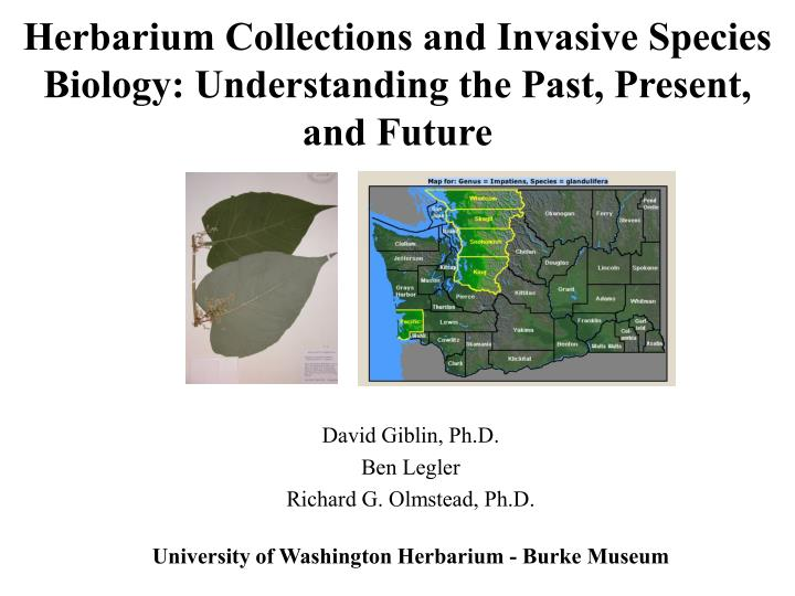Herbarium collections and invasive species biology understanding the past present and future