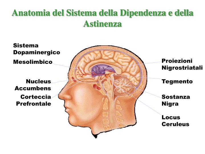Anatomia del Sistema della Dipendenza e della Astinenza