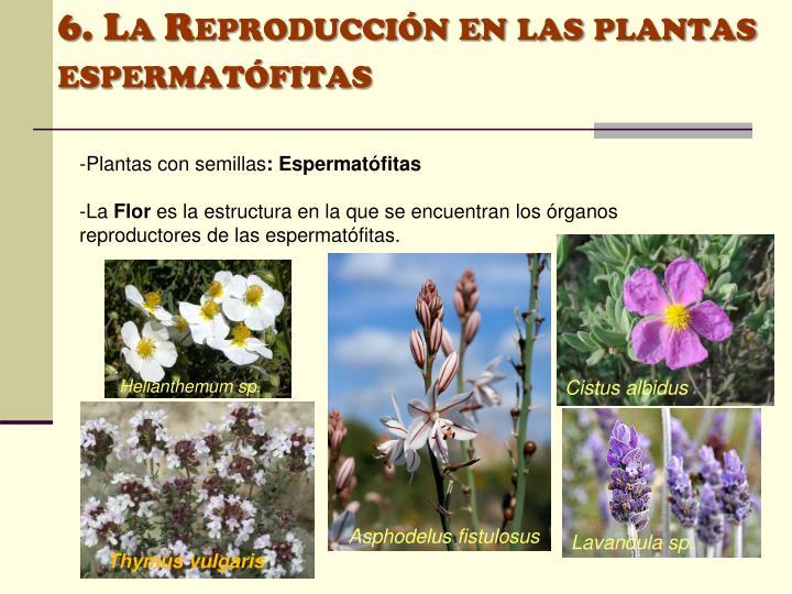 6. La Reproducción en las plantas