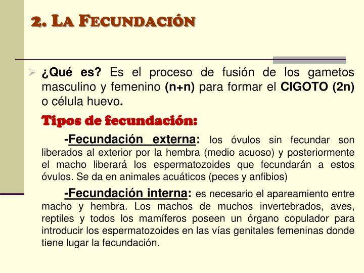 2. La Fecundación