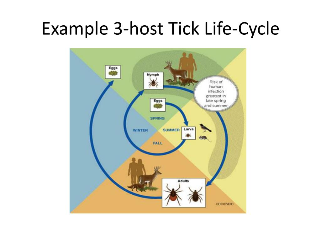 Example 3-host Tick Life-Cycle