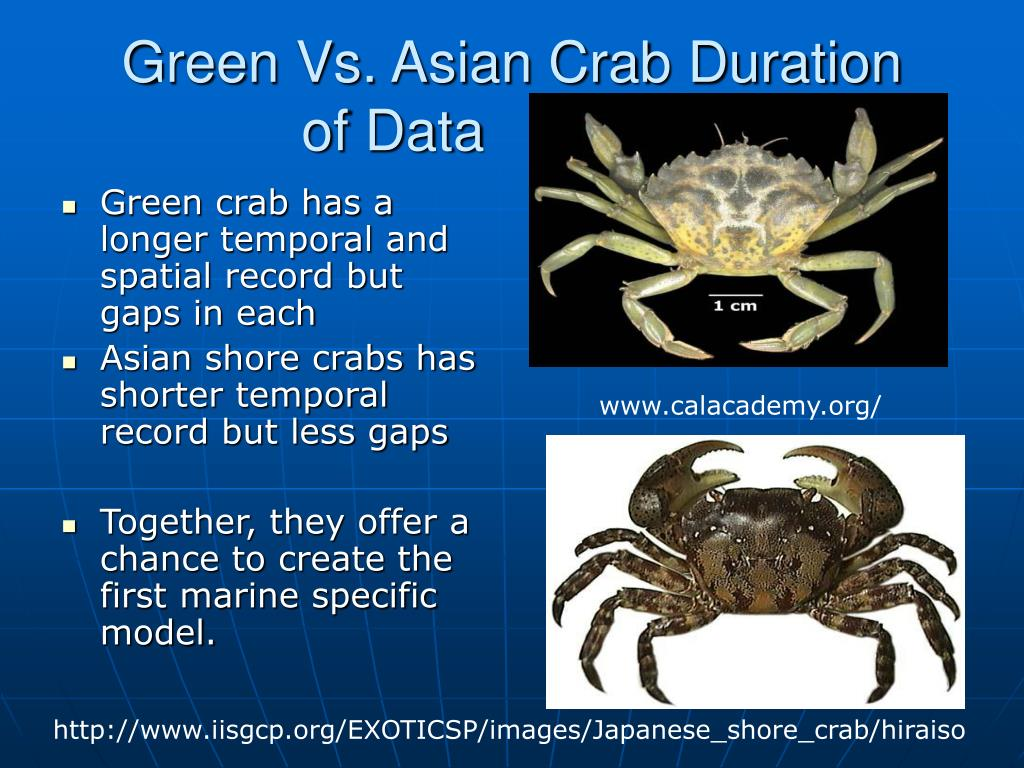 Green Vs. Asian Crab Duration