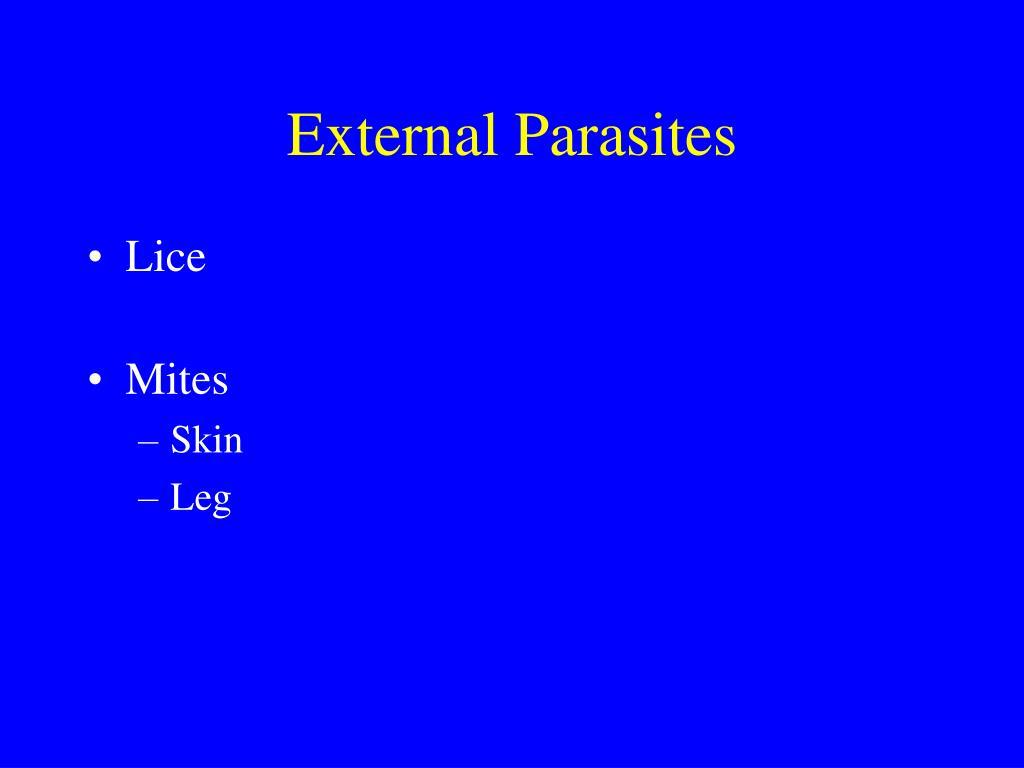 External Parasites