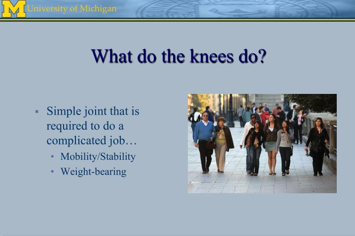What do the knees do?