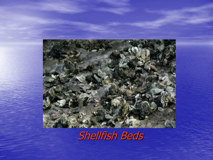 Shellfish Beds