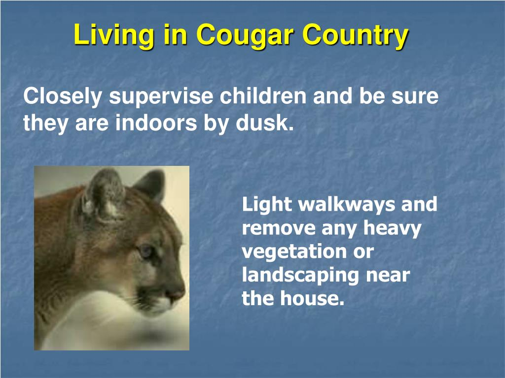 Living in Cougar Country