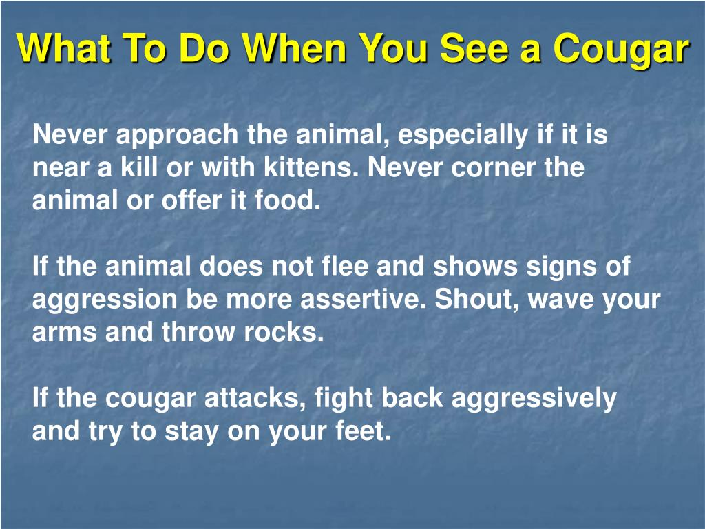 What To Do When You See a Cougar