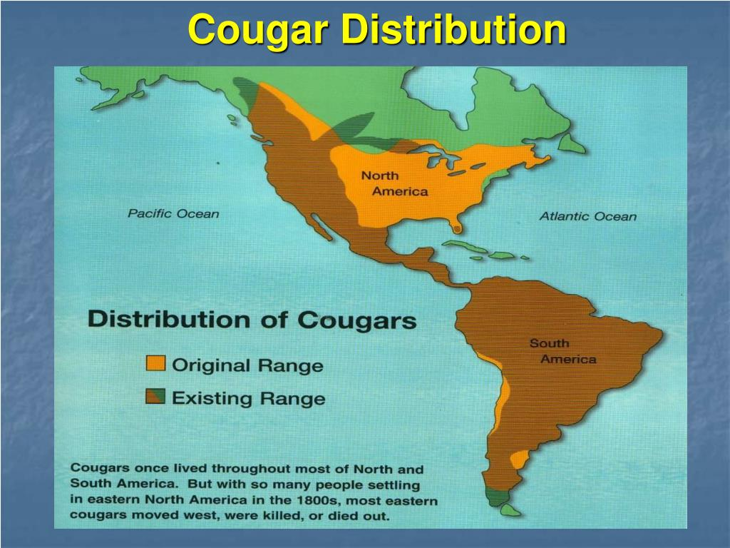 Cougar Distribution
