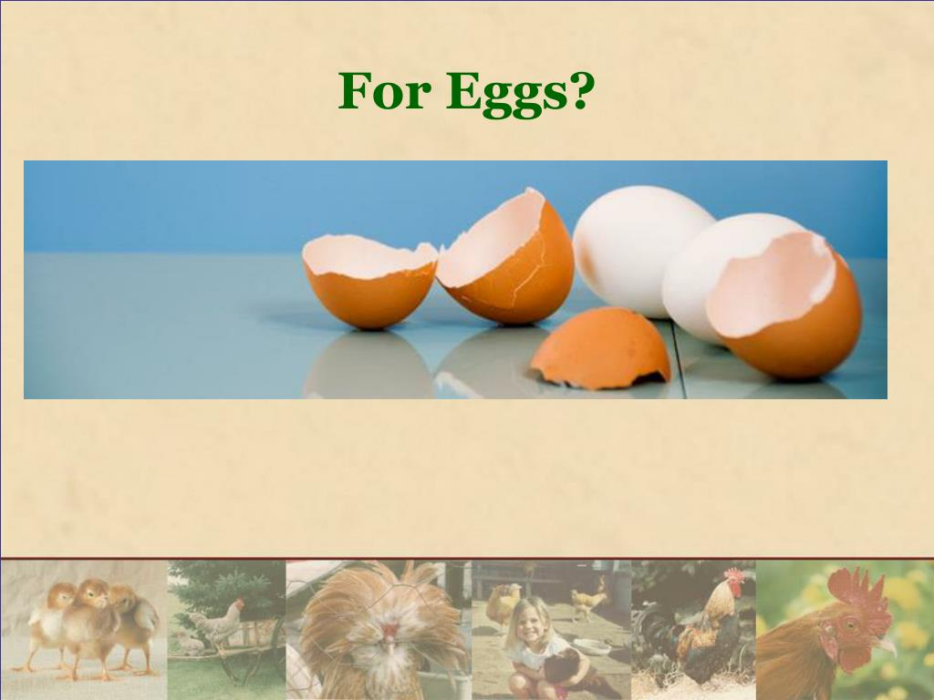For Eggs?