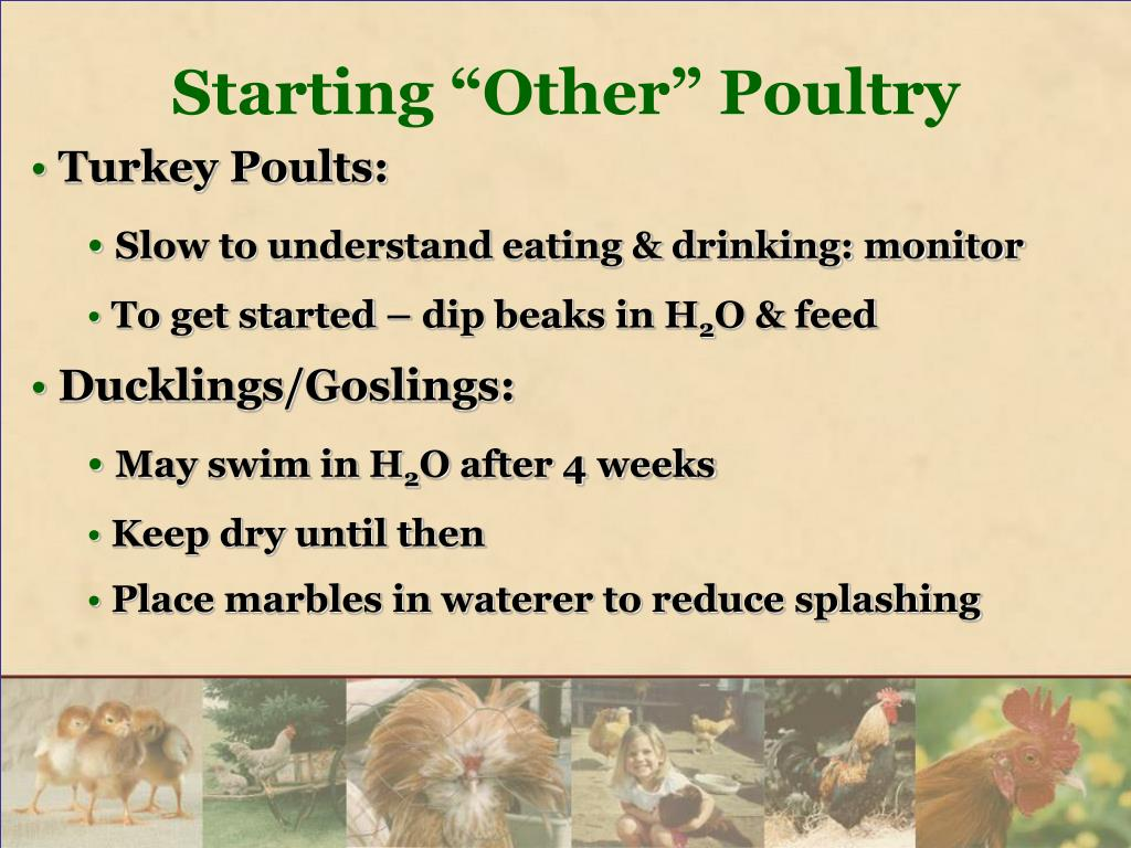 """Starting """"Other"""" Poultry"""