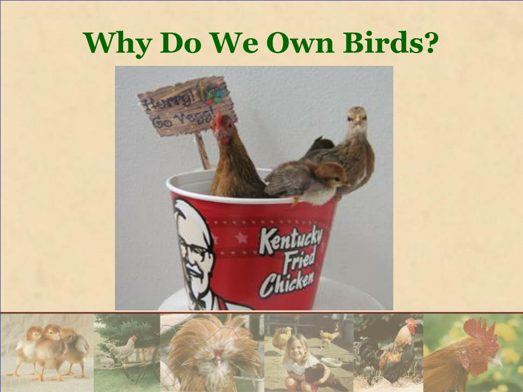 Why Do We Own Birds?