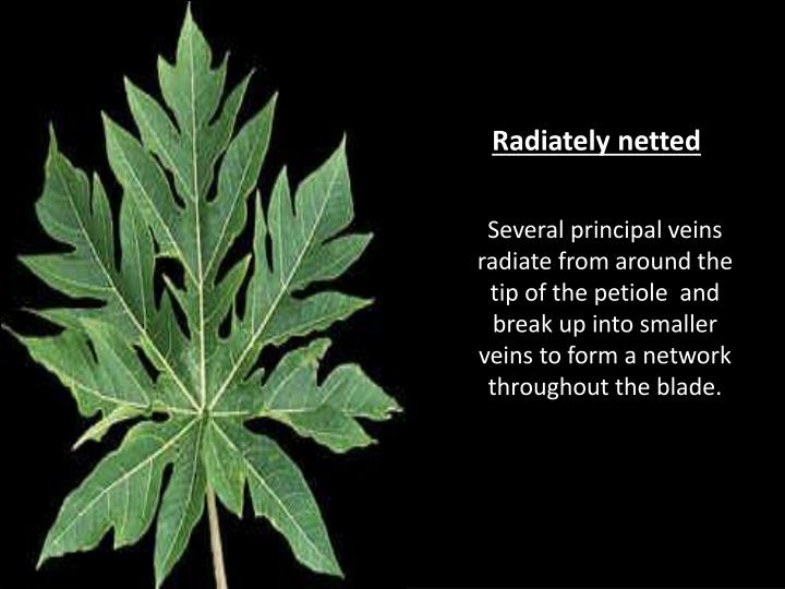 Radiately netted