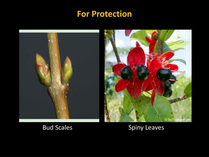 For Protection