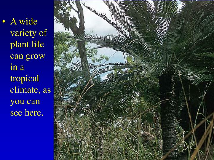 A wide variety of plant life can grow in a tropical climate, as you can see here.