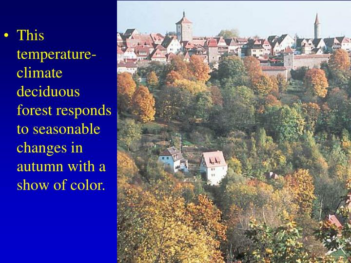This temperature-climate deciduous forest responds to seasonable changes in autumn with a show of color.
