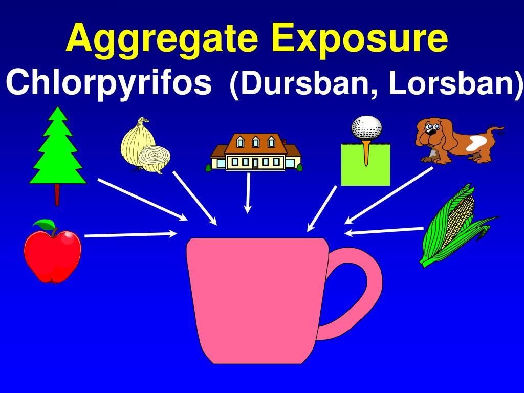Aggregate Exposure