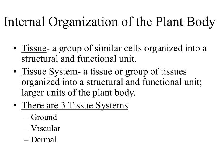 organization of the plant body and Within the e lathyris plant body is reported, emerging as a single elongated and   we also report the ontogeny and organization of laticifer cells in the embryo.